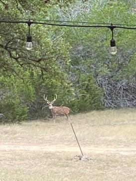 Wildlife Ranch photo 2